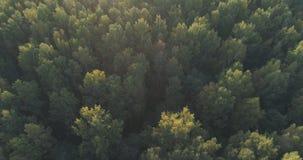 Det flyg- flyget över höstträd i löst parkerar i september Arkivbilder