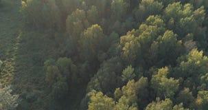 Det flyg- flyget över höstträd i löst parkerar i september Royaltyfri Fotografi