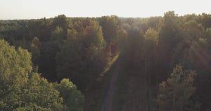Det flyg- flyget över höstträd i löst parkerar i september Royaltyfri Foto