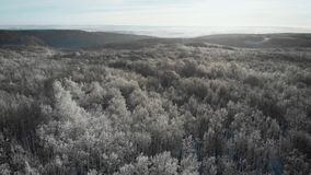 Det flyg- flygparadskottet av vintergranen och att sörja Forest Trees Covered med snö, den stigande inställningssolen trycker på  stock video