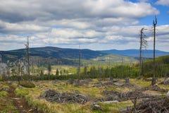 Det forested bergiga landskapet nära sjön Laka, Šumava, Tjeckien arkivbilder