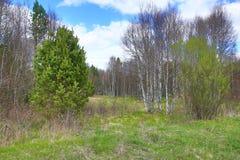Det forested bergiga landskapet nära sjön Laka, Prášily, Šumava, Tjeckien royaltyfri foto