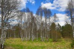 Det forested bergiga landskapet nära sjön Laka, Prášily, Šumava, Tjeckien arkivbild
