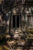 Det forntida fönstret, med rotar av träd Fotografering för Bildbyråer