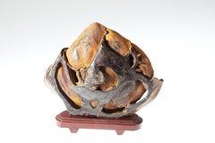 Fossil- trä arkivbild