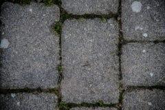 Det fria däckar tegelplattor som av naturen invaderas arkivfoton