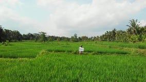 Det fria för ung kvinna med whiteboard- och handskriftordet som är tropiskt på det Surr som flyger längd i fot räknat Grönt ljust arkivbild