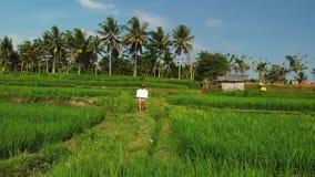 Det fria för ung kvinna med whiteboard- och handskriftordet som är tropiskt på det Surr som flyger längd i fot räknat Grönt ljust fotografering för bildbyråer