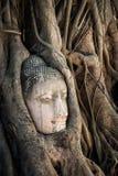 Det fristående Buddhahuvudet som inneslutas i fikonträd, rotar Ayutthaya Thailand Arkivfoto