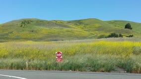 Det frodiga Kalifornien fältet & skriver in inte tecknet Royaltyfri Bild