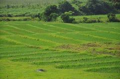 Det frodiga landskap av Vinales, Kuba Royaltyfri Fotografi