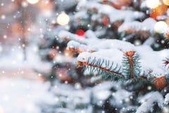 Det frostiga vinterlandskapet i snöig skog sörjer filialer som täckas med insnöat kallt vinterväder royaltyfri foto