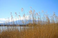 Det Fujiyama berget täcktes av den höga ängen Arkivfoto