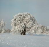 Det fulla frostade trädet i vit hoar under snö täckte fältet Royaltyfri Bild