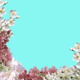 Det fyrkantiga hälsningkortet, collage av våren blommar Royaltyfri Foto