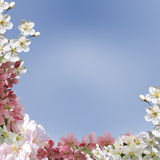 Det fyrkantiga hälsningkortet, collage av våren blommar mot himlen Arkivbild