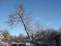 Det gamla äppleträdet står bara, i vinter Arkivbilder