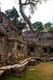 Det gamla banyanträdet står högt över det forntida fördärvar av templet för Ta Phrom, Angkor Wat, Cambodja Arkivbilder
