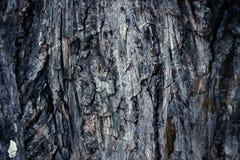 Det gamla slipmedlet färgade skället av sörjer, skogträtextur Vinter, höst, sommar eller vår, Arkivfoton