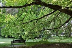 Det gamla trädet och parkerar bänken Royaltyfri Fotografi