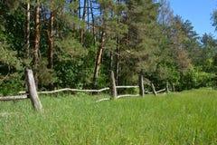 Det gamla trälantliga staketet nära sörjer trädskogen fotografering för bildbyråer
