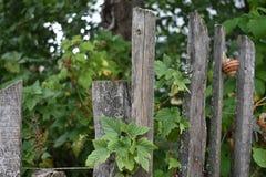 Det gamla trästaketet av trädgården och fruktträdgården royaltyfri fotografi