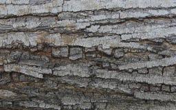 Det gammala Treeskället texturerar Royaltyfri Foto