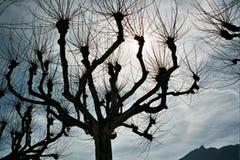 Det gigantiska trädet royaltyfria foton