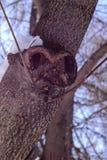 Det gigantiska trädet Royaltyfri Fotografi