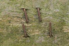 Det gråa träbrädet med bultat vridet rostigt spikar royaltyfri bild