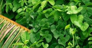 Det gröna bladet, gräsplan lämnar bakgrund, palmträd royaltyfri foto