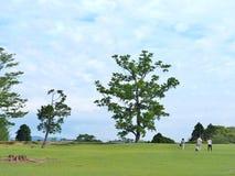 Det gröna fältet med blå himmel på Nara parkerar, Japan arkivfoto