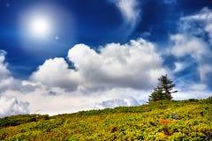 Det gröna fältet och trädet och blå himmel med solen strålar bakgrund Royaltyfri Foto
