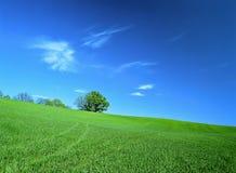 Det gröna fältet, vit fördunklar i den blåa himlen n Arkivbilder