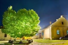 Det gröna glödande trädet i natten parkerar arkivfoton