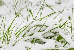 Det gröna gräset är under snö Arkivfoton