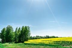Det gr?na gr?set och tr?den i f?rgrunden och det gula rapsfr?f?ltet, naturlandskapbakgrund arkivbild