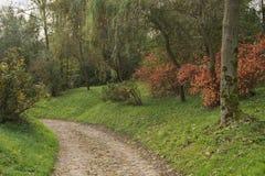 Det gröna naturlandskapet under nedgångsäsong med höstträdet färgar Royaltyfri Foto