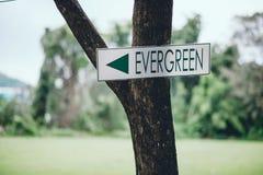 Det gröna tecknet klibbade på ett grönt träd för att berätta vägen Och appropen royaltyfri foto