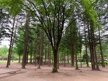 Det gröna trädet i parkerar bakgrund fotografering för bildbyråer