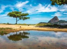 Det gröna trädet och Guanabaraen skäller på bakgrunden av det Sugarloaf berget, Rio De Janeiro, Brasilien royaltyfri bild