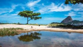Det gröna trädet och Guanabaraen skäller på den soliga dagen med det Sugarloaf berget i bakgrunden, Rio De Janeiro, Brasilien arkivfoto