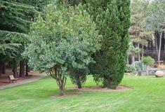 Det gröna trädet på gräsmattan i ett exotiskt parkerar Fotografering för Bildbyråer