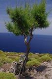 det greece patmosstället kopplar av till Royaltyfria Bilder