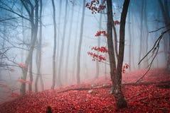 Det grunda djupet för dimmig höstskog av fältet Arkivbild