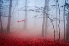 Det grunda djupet för dimmig höstskog av fältet Royaltyfri Fotografi