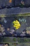 Det gula bladet på trappan i höst parkerar Arkivfoto