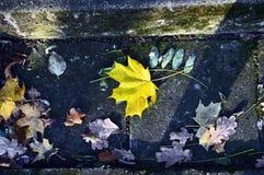 Det gula bladet på trappan i höst parkerar Fotografering för Bildbyråer