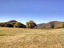 Det gula fältet med klar himmel royaltyfri bild