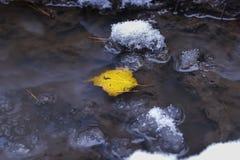 Det gula höstbladet ligger i en pöl med snö Royaltyfria Bilder